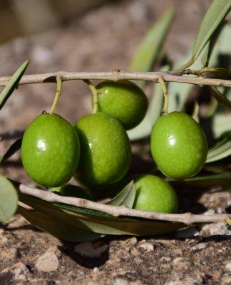Come conservare le olive in acqua