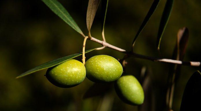 Come conservare le olive con la soda caustica